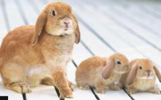 Разведение кроликов: в малых, средних, промышленных масштабах, выгодно или нет, как сбывать продукцию, особенности, сроки получения прибыли