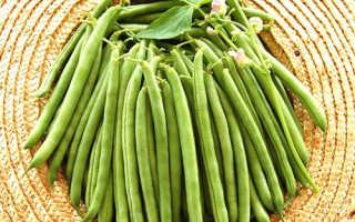 Стручковая фасоль — польза и вред, калорийность, полезные свойства, видео