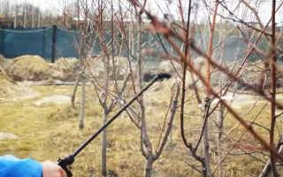 Сад весной: Чем опрыскивать деревья и кустарники, когда, Дача
