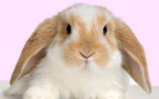 Нужна ли подстилка кроликам?