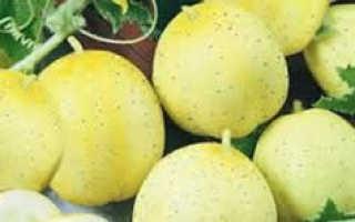 Хрустальное яблоко, или огурец-лимон