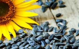 Семечки подсолнуха – польза, вред и противопоказания