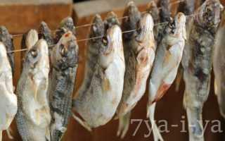 Вяление рыбы технология производства вяление в домашних условиях