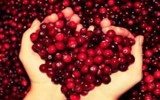 Клюква: лечебные свойства ягоды, ее противопоказания и рецепты для лечения