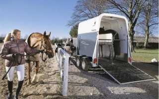 Как правильно перевозить лошадь — Сайт о лошадях