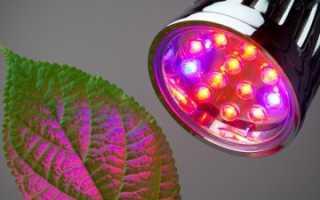 Освещение для рассады: виды осветительных приборов и правила установки