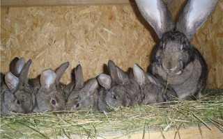 Маточник для кроликов своими руками: чертежи с размерами