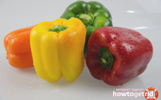 Болгарский перец — польза и вред для здоровья организма