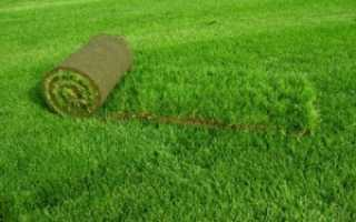 Укладка рулонного газона своими руками шаг за шагом