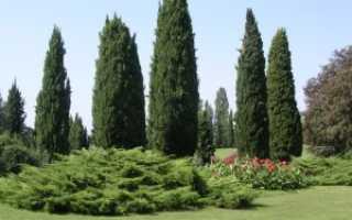 Виды и сорта кипарисов для сада