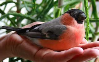 Какую птицу завести? Какую птицу лучше завести в квартире?
