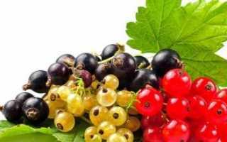 Чем и как обработать смородину осенью после сбора урожая