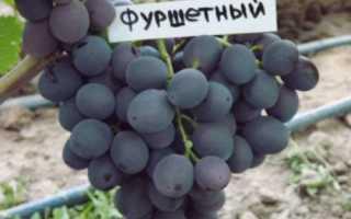 Виноград фуршетный: описание сорта, особенности выращивания