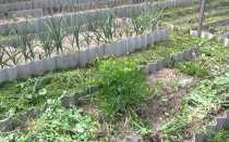 Сорняки на огороде: названия фото