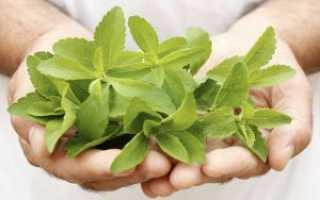 Трава стевия: польза и вред, лечебные свойства и противопоказания, применение в народной медицине
