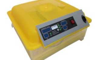 Инкубатор АИ 48: преимущества модели, характеристики и функции