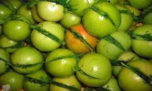 Засолка зеленых помидор холодным способом в кастрюле (рецепты)