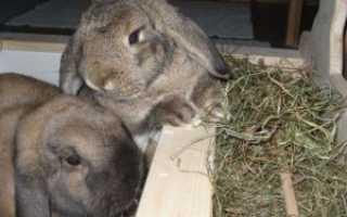 Сенник для кроликов: как сделать кормушку для сена своими руками