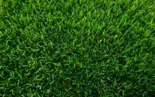 Газонная трава которая вытесняет и уничтожает сорняки