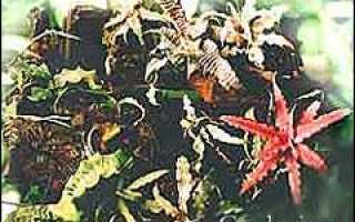 Посадка и содержание эпифитных растений в доме