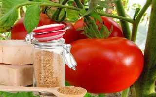 Подкормка помидор дрожжами в теплице и открытом грунте