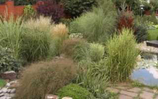 Декоративная трава для клумбы: названия, описание, фото