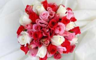 Истории, поверья и легенды о розах