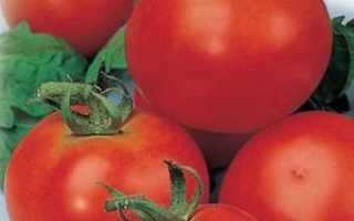 Томаты «Красная шапочка»: характеристика сорта и особенности ухода
