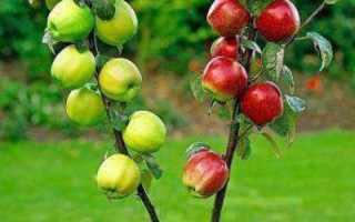 Сроки прививок плодовых деревьев