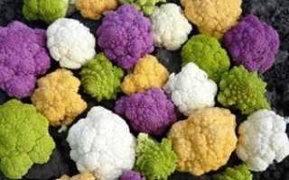 Цветная капуста на собственном огороде: что нужно знать о посадке и уходе за этим растением?