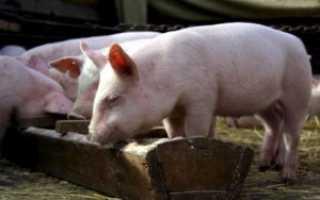 3 способа сделать кормушку для свиней своими руками
