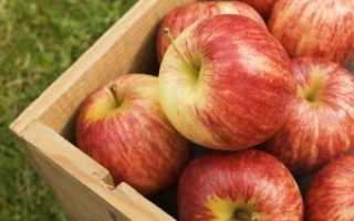 Описание зимних сортов яблонь для Подмосковья