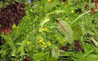 Сорта салатов: разновидности и описание