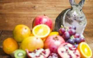 Какими овощами и фруктами можно кормить декоративных кроликов