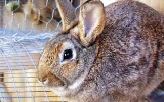Понос у кроликов: причины, лечение и профилактика