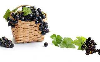 Черная смородина, полезные свойства и противопоказания, Здоровое питание