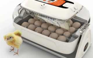 Инкубаторы для яиц: Какие бывают и Какой лучше выбрать для бытового использования Видео и Фото