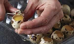 Как правильно и аккуратно разбить перепелиные яйца: простые способы