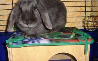 Игрушки для декоративных кроликов сделать своими руками