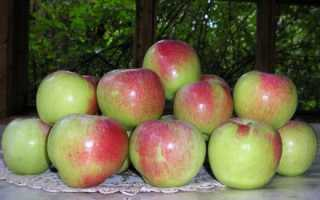 Поздние сорта яблок: фото с названием, описание яблонь