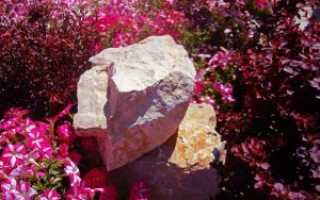 Разновидности петунии: лучшие сорта для вашего сада с описанием и фото