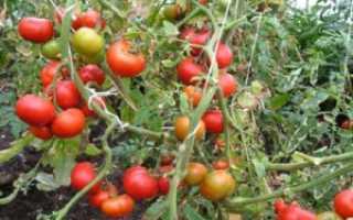 Томат Жонглер: характеристика и описание сорта, урожайность отзывы и фото кто сажал