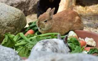 Можно ли кормить кроликов семечками: в чём польза и вред, как правильно давать