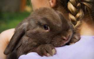 Карликовый кролик: фото, уход и содержание в домашних условиях, отзывы