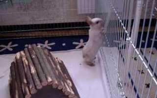 Уход и содержание декоративного кролика в квартире