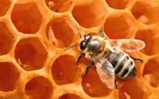 Чем полезен пчелиный воск: лечебные свойства и противопоказания