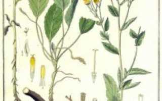 Канупер трава лечебные свойства и применение