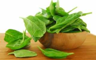 Применение шпината: польза и вред для здоровья человека