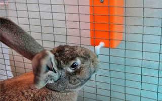 Поилки для кроликов, делаем своими руками автопоилки и ниппельные по чертежам и фото, видео