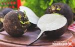 Черная редька — польза и вред для здоровья организма